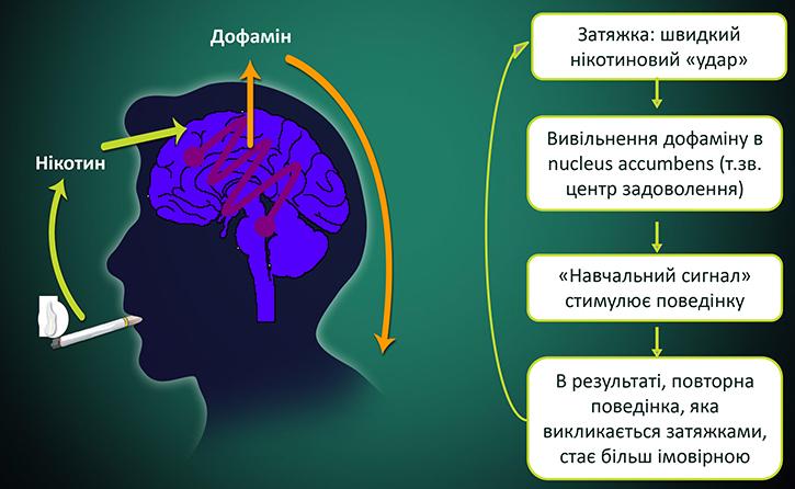 Как развивается никотиновая зависимость