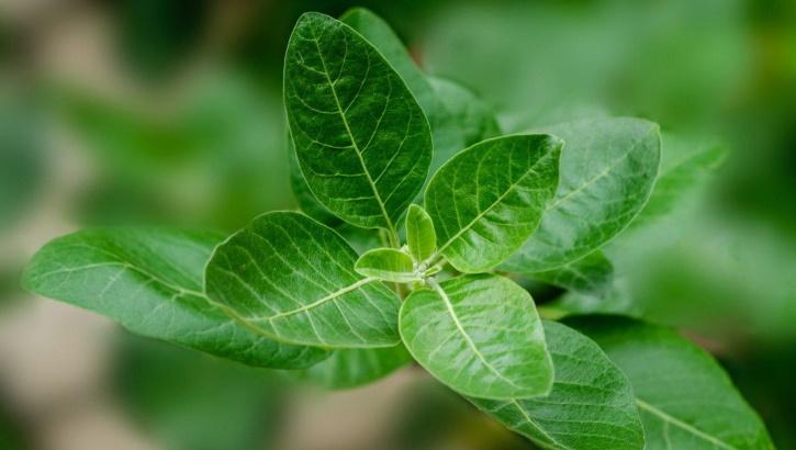 Облегчить симптомы простуды: природное лечение