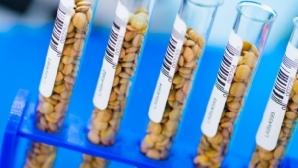 ГМО очередной раз признали безопасными