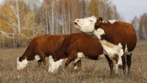 Синтетическое мясо полюбят даже веганы