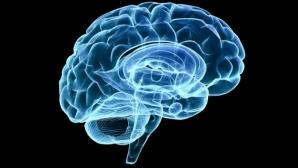 Обнаружены новые функции мозжечка