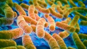Создано новое оружие против антибиотикорезистентных бактерий