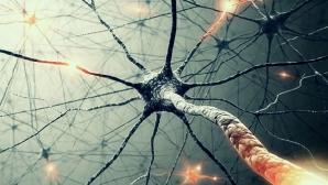 Эпидуральная стимуляция – новый способ лечения инвалидизирующих травм