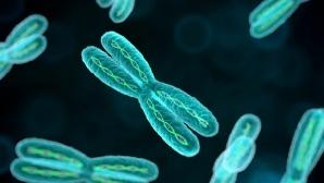Ученые «разоблачили» теломеразу