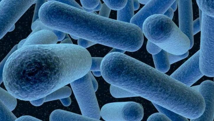 Как пробиотики влияют на женское здоровье