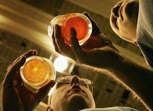 Кодирование от алкоголя вред или польза