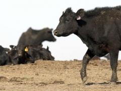 коровье бешенство