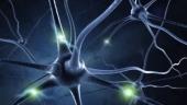 Омега кислоты – защита от инсульта