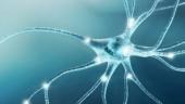 Как снять стресс и восстановить нервные клетки?